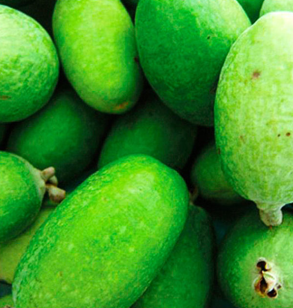 FEIJOA-coocking3